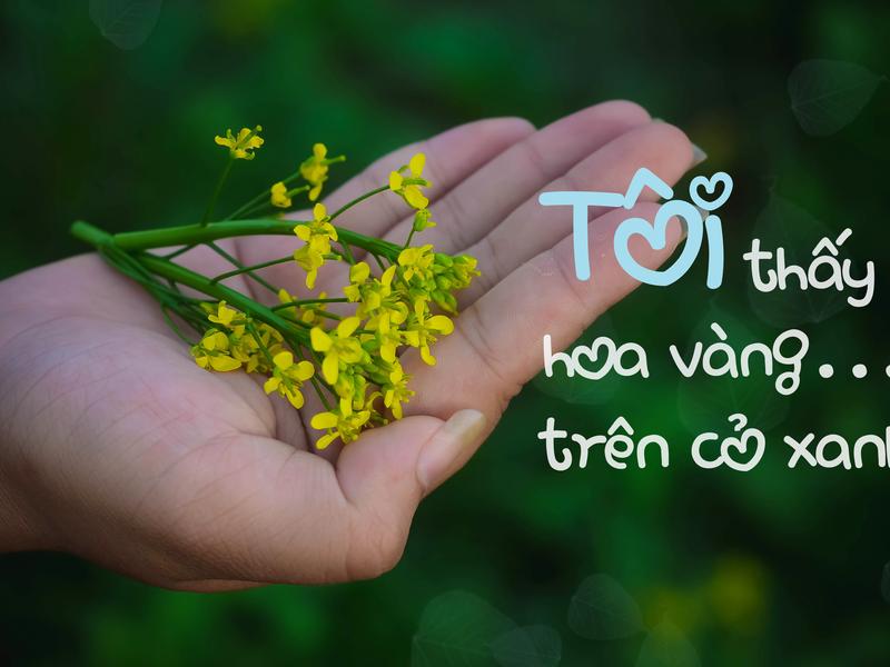 Du lịch Phú Yên - Mảnh đất hoa vàng trên cỏ xanh